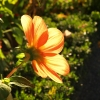backlighted flower